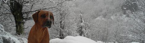 Ardèche en hiver avec Starck qui joue dans la neige