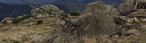 Le sentier des Granges l'arbre mort